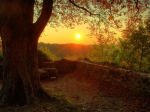 NATURE_at_DAWN_Wallpaper_is208