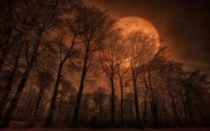 golden-moon-light-dark-moon-facebook-timeline-cover-photo,1440x900,66675